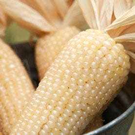 Drought-Tolerant Corn Efforts Show Positive Early Results