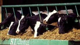 Gene-Edited Animals Face U.S. Regulatory Crackdown
