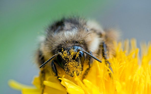 New Law Would Help Bees--but Could Leave Other Pollinators out in the Cold