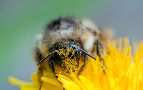 New Law Would Help Bees--but Could Leave Other Pollinators