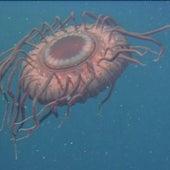 DEEP-SEA JELLYFISH