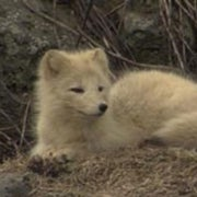 Arctic Report Card: Dark Times Ahead