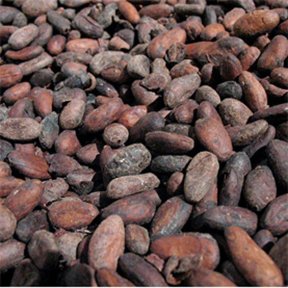 Climate Change Could Melt Chocolate Production