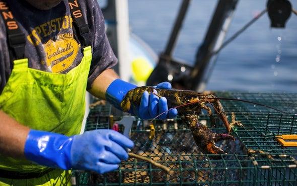 Fishermen Sue Oil Companies Over Rising Ocean Temperatures