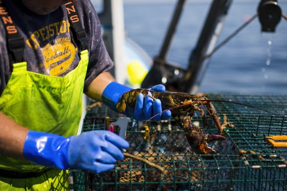 Fishermen Sue Oil Companies Over Rising Ocean Temperatures