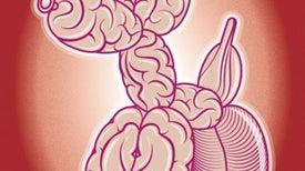 Your Fertile Brain at Work