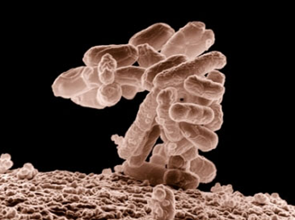 Microbes Defy Rules of DNA Code