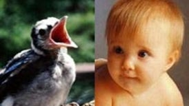 Vocal Learning Similar in Humans, Birds