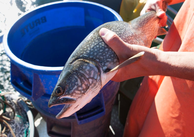The Battle to Save Yellowstone from Invasive Fish [Slide Show]