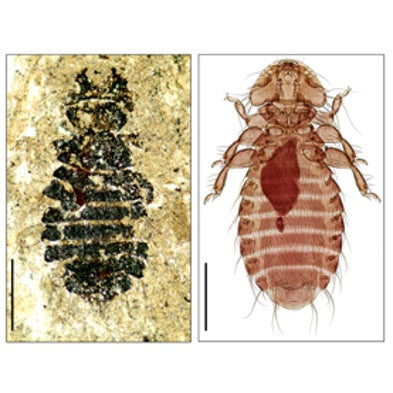 Lousy with Success: Genetics Reveal Fossil Lice as Evolutionary Champions [Slide Show]