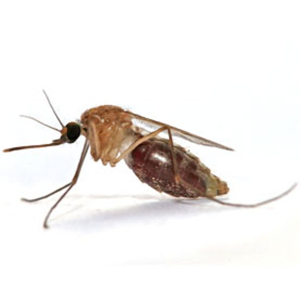 Malaria Mosquitoes Gain Ground as Search for New Defenses Intensifies