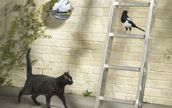 Killer Cats Bash Biodiversity