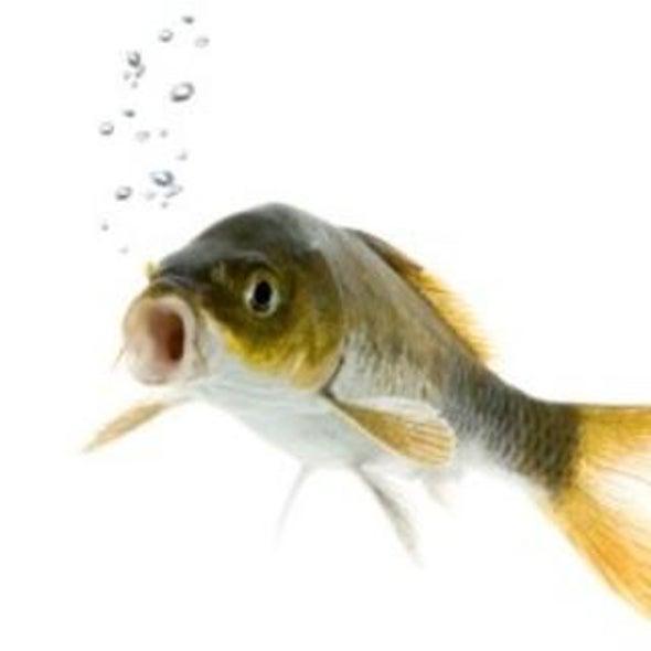 Underwater Suffering: Do Fish Feel Pain?