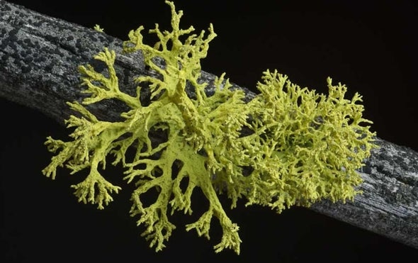 For Lichens, 3's Not a Crowd