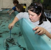 STURGEON CAPTIVE BREEDING