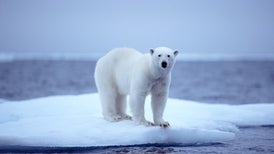 Autonomous Aircraft Maps Sea Ice and Tracks Polar Bears