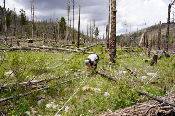 Tree by Tree, Scientists Try to Resurrect a Fire-Scarred Forest