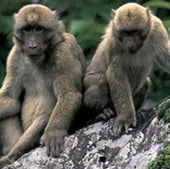 MISCHIEVOUS MONKEYS