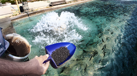Faux Fish Might Help Aquaculture Keep Feeding the World