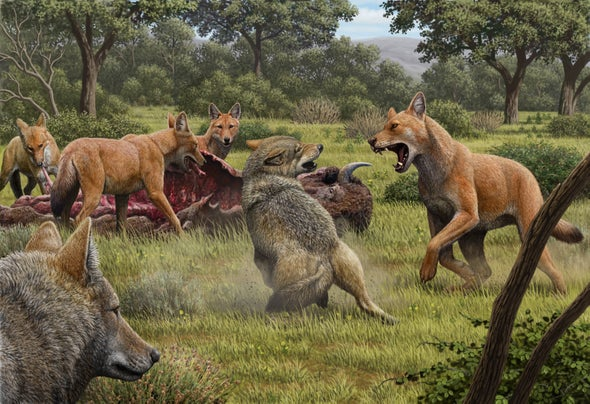 Dire Wolves Were Not Really Wolves, New Genetic Clues Reveal
