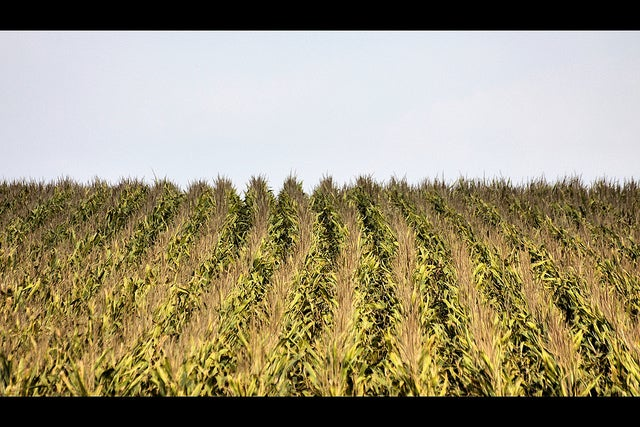 Biofuels Might Hold Back Progress Combating Climate Change