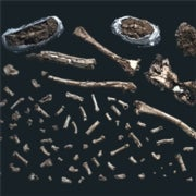 Will Scientists Ever Be Able to Piece Together Humanity's Early Origins?