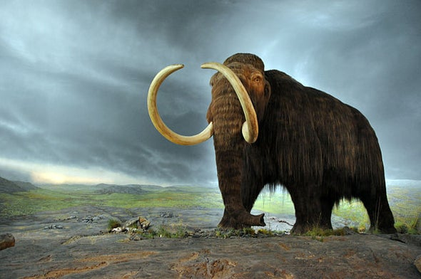 Mammoth Genomes Provide Recipe for Creating Arctic Elephants