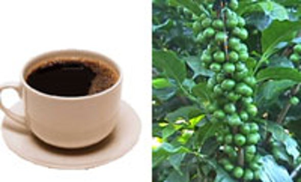 Decaf Coffee Plants Developed