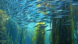 Marine Ecosystems Are Preparing for Climate Change