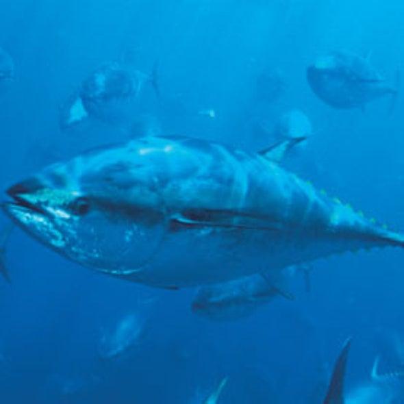 Fuskushima Radiation May Help Scientists Track Wildlife