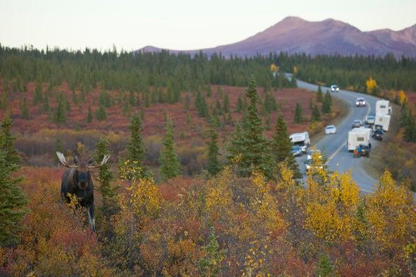 Human Noise in U.S. Parks Threatens Wildlife