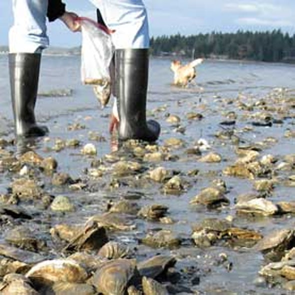 U.S. Effort on Ocean Acidification Needs Focus on Human Impacts