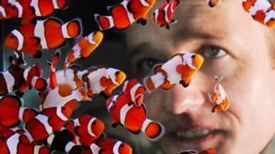Tropical Depression: Your Saltwater Fish Tank May Be Killing the Ocean