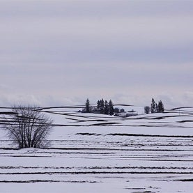 palouse, winter farm, wheat, inland Northwest, Washington, snow, sunset, TNCWC57