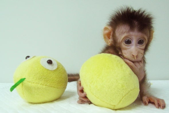 "First Primate Clones Produced Using the ""Dolly"" Method"