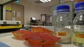 Plastic Clamshells Can Be Made from Real Crab Shells