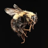 07. Bumble Bees
