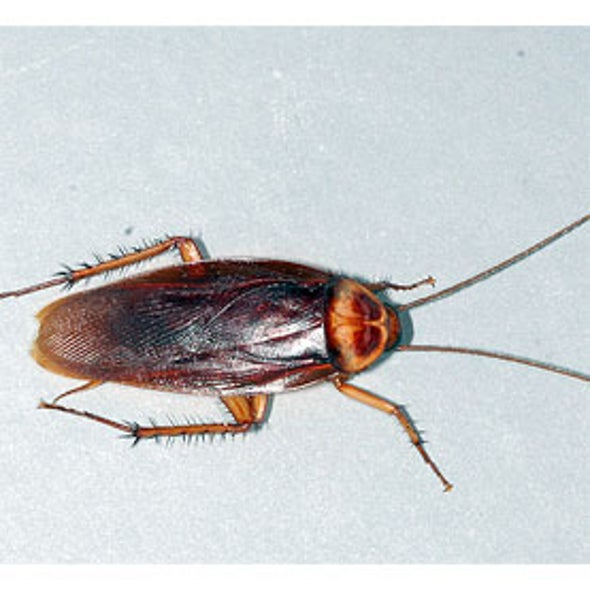National Cockroach Project