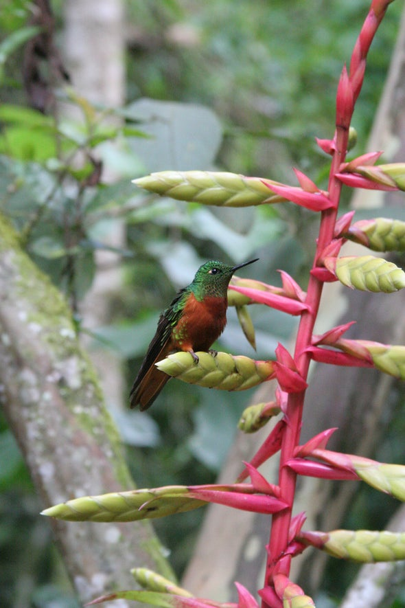 Hummingbird Evolution Is Booming