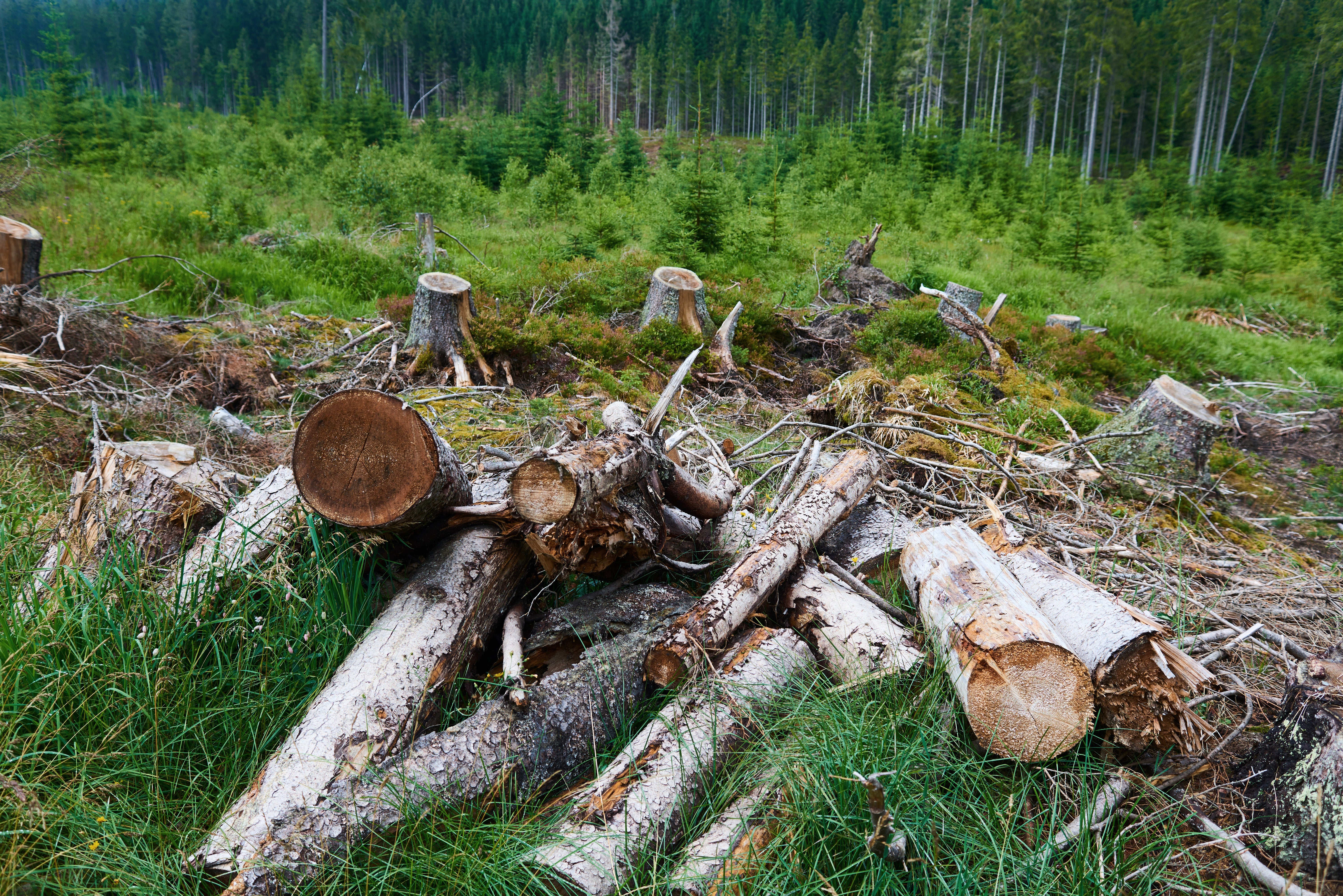 <p>European Forests Have Become More Vulnerable to Insect Outbreaks thumbnail