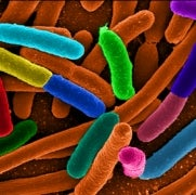 A Faster Way to Diagnose Antibiotic Resistance