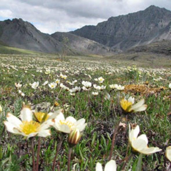 Vegetation May Speed Warming of Arctic