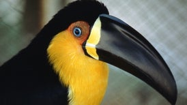 Bird Beak Shapes Depend on More Than Diet