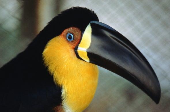 Bird Beak Shapes Depend on More Than Diet