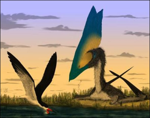Pterosaur: Probably Not a Skimmer