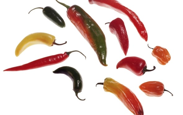 Feel the Burn--New World Chilies Traced Back Nearly 17 Million Years