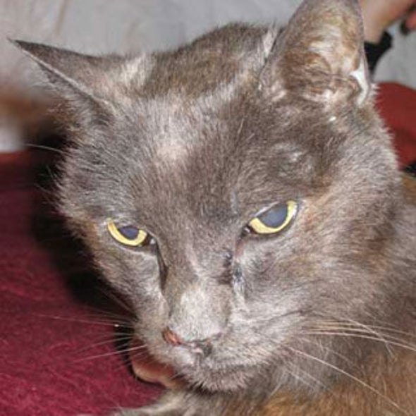 The Incredible Journey Microchip Id Reunites Owners With Cat 13 Years Later