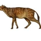 Sifrhippus