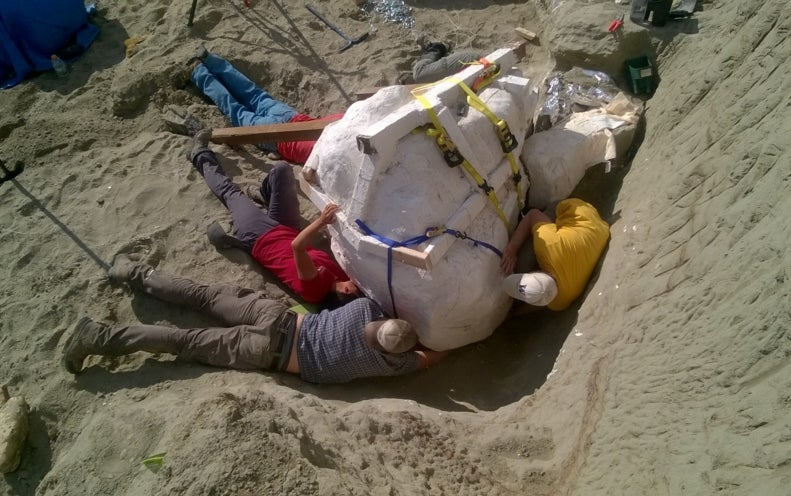 <i>T. rex</i> with Well-Preserved Skull Found in Montana's Hell Creek Formation