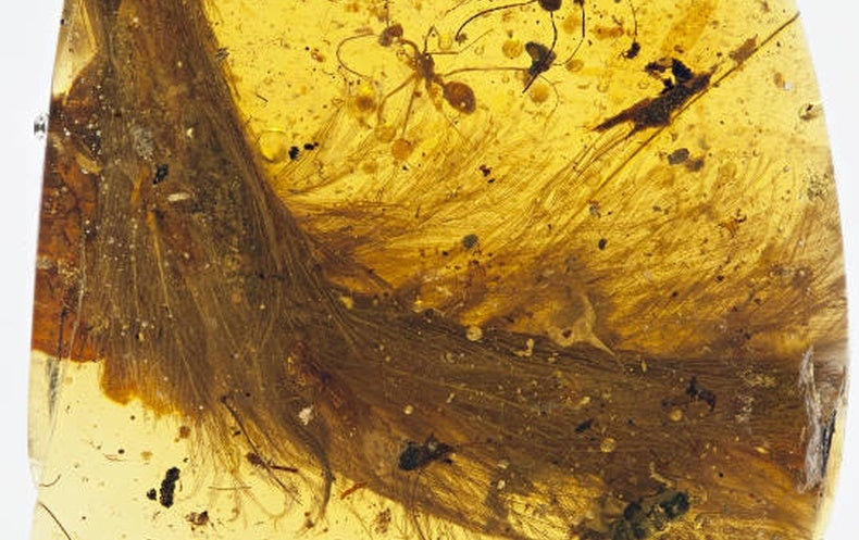 Entire Chunk of Feathered Dinosaur Discovered in Amber